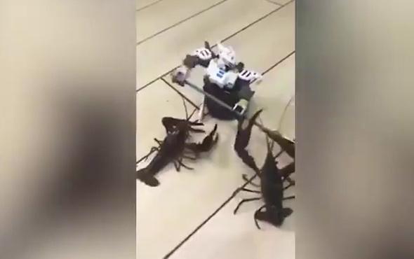 Star Wars robotu ıstakozlara karşı!