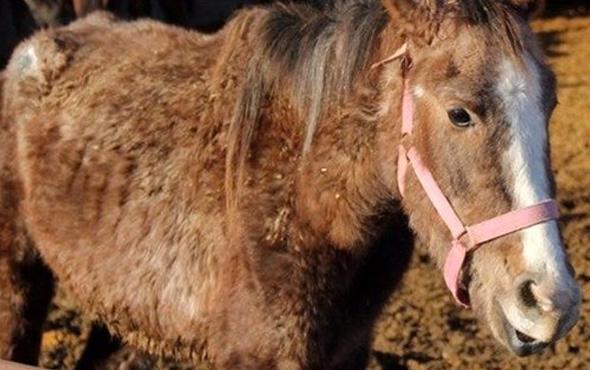 At eti sanıklarından olay ifade: Yedim ama satmadım