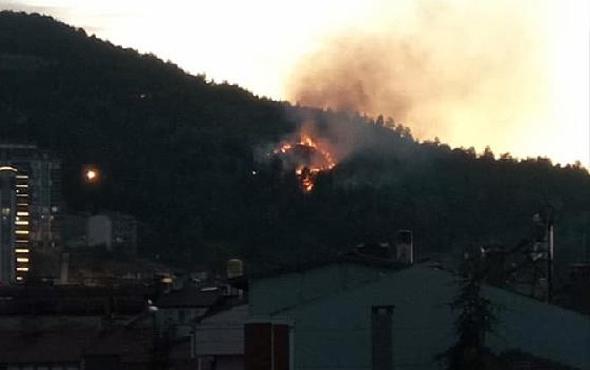 Tokat'ta çamlık alanda korkutan yangın