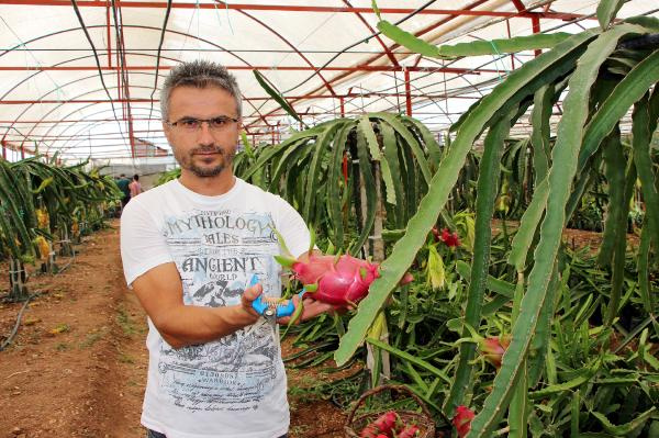 Sebzeleri söküp ejder meyvesi diktiler paraya para demiyorlar! - Sayfa 1
