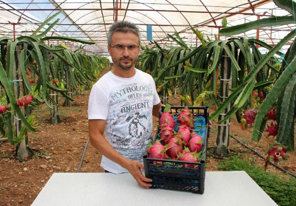 Sebzeleri söküp ejder meyvesi diktiler paraya para demiyorlar! - Sayfa 3