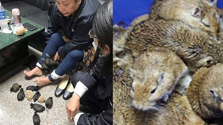 Kadının pantolunundan tam 24 tane fare çıktı böyle şey görülmedi - Sayfa 4