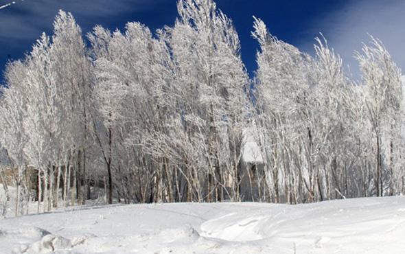 Çaldıran'da eksi 40 derecede elbiseler dondu, ağaçlar buz tuttu