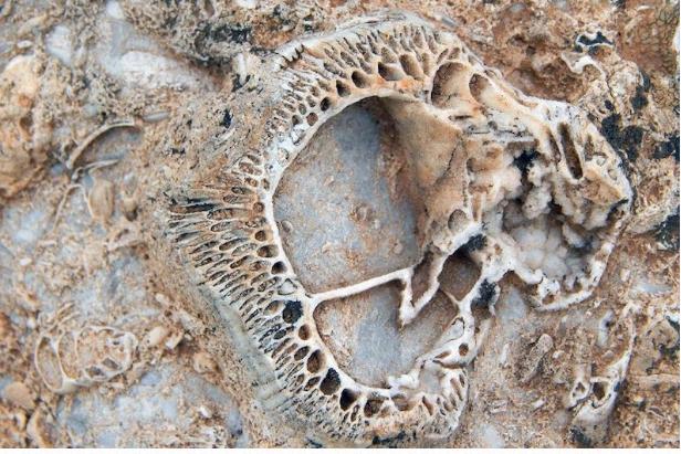 Konya'da bulunanlar tam 98 milyon yıllık çıktı görenler şaşkına döndü - Sayfa 2