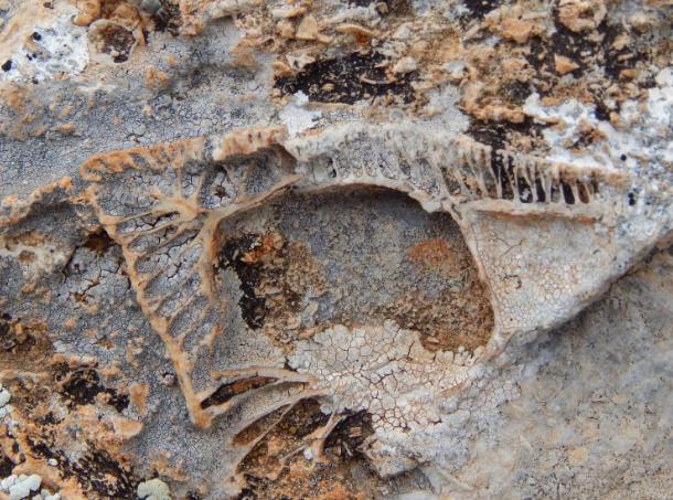 Konya'da bulunanlar tam 98 milyon yıllık çıktı görenler şaşkına döndü - Sayfa 4
