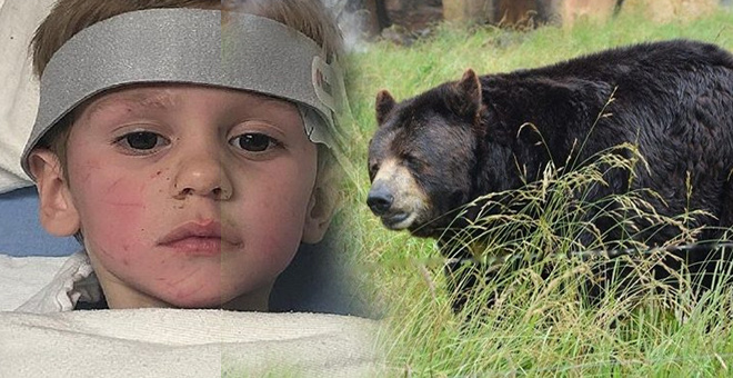 Kaybolan çocuk, 2 gün sonra bulundu: Beni bir ayı korudu - Sayfa 1