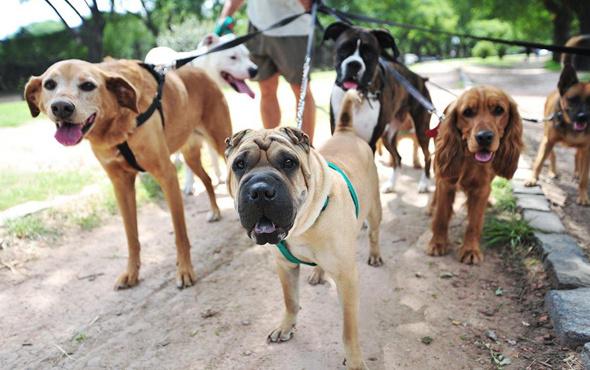 Köpek gezdirmek artık yasak o ülkeden garip karar