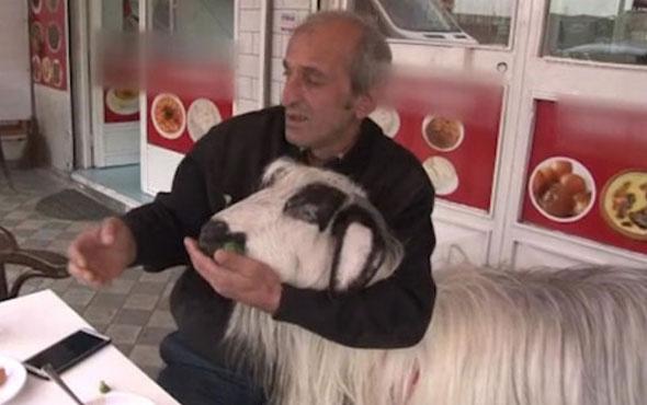 Sahibiyle kahvaltı yapan keçi bir anda hayatının şokunu yaşadı!