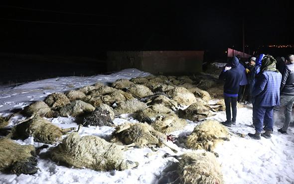 Van'da ahır çöktü: Onlarca koyun telef oldu!