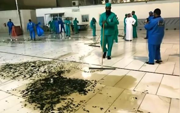 Mekke'yi çekirgeler ve hamam böcekleri bastı