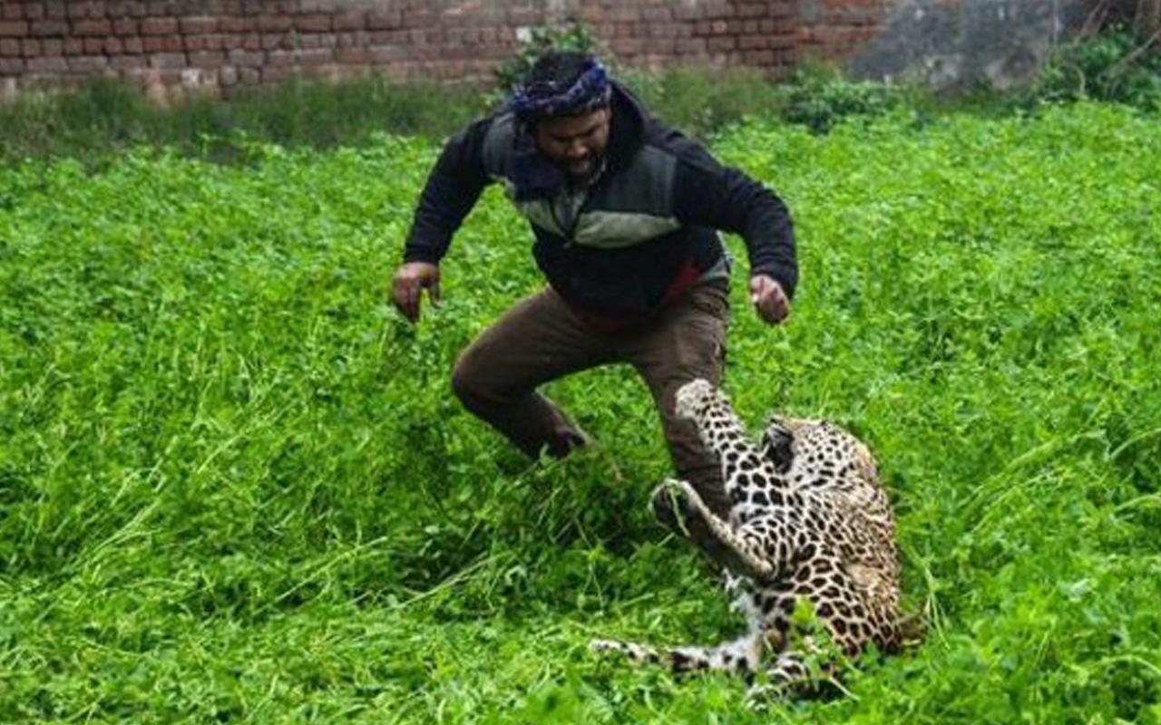 Köyde leopar dehşeti: 6 kişi yaralı