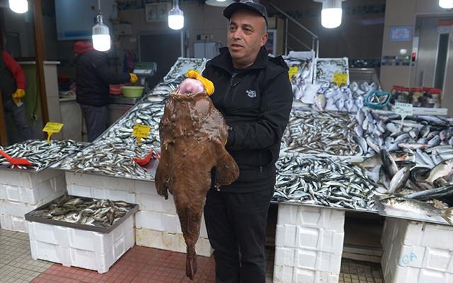 Sinoplu balıkçılar yakaladı: Görenler şaşkına döndü! - Sayfa 3