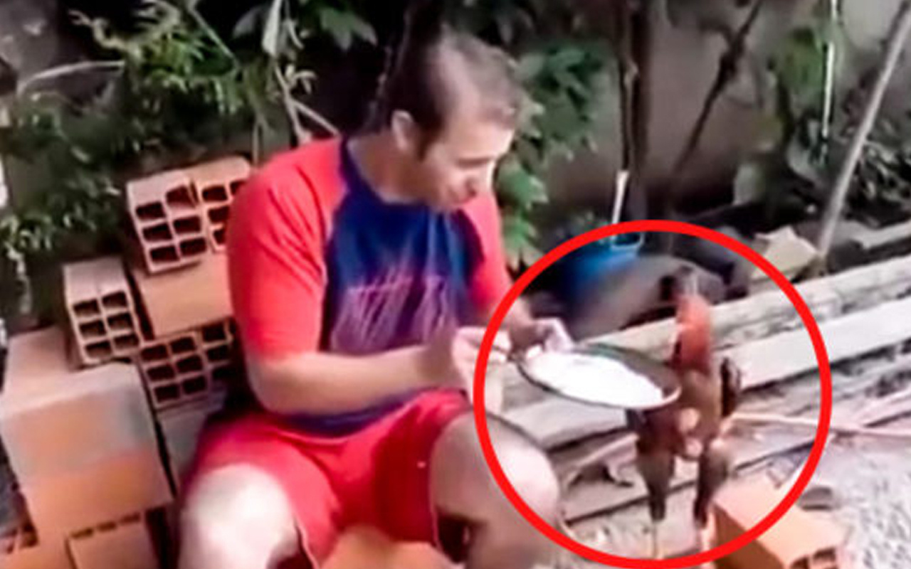 Tavuğuyla pilav yiyen adam