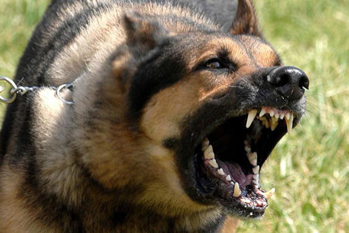 Köpeklerine saldırısından kaçarken canından oldu