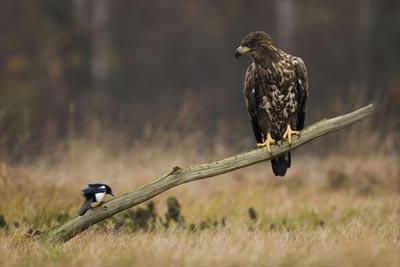 Son dört yılda seçilen en iyi kuş fotoğrafları