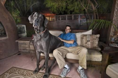 Dünyanın en büyük köpekleri görenleri ürkütüyor