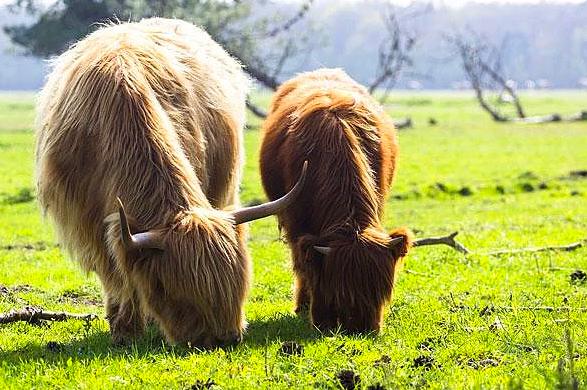 Anneleriyle poz veren sevimli hayvanlar