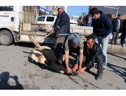 Buldukları inekleri sokakta kesiyorlar!