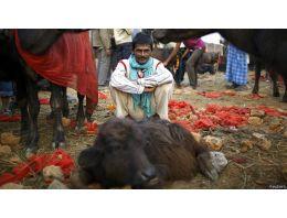 Binlerce hayvan böyle katlediliyor!