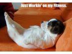 En komik köpek fotoğrafları