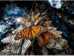 2014 yılının muhteşem hayvan fotoğrafları