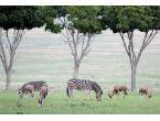 Tel örgülerin ardındaki 'doğal yaşam'