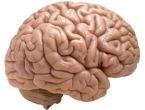 Beyni öldüren gıdalar
