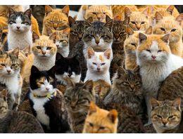 Japonya'nın 'Kedi Adası'