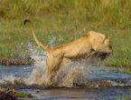 Vahşi doğada inanılmaz saldırılar