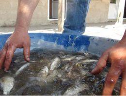 Tarlalardan balık tuttular