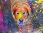 Günün en renkli 50 fotoğrafı