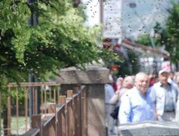 Şehre inen arılar kabus yaşattı