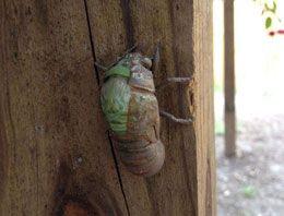 Böceğin inanılmaz dönüşümü