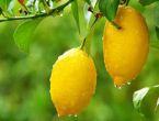 Limonun faydaları sivilceleri yok ediyor