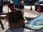 Kaçan arılar caddeyi sardı