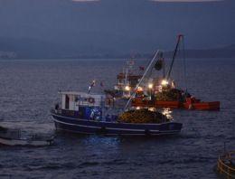 Balık avı sezonu törenle başladı