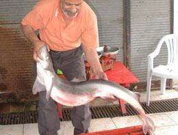 Karadeniz'de oltaya köpek balığı takıldı