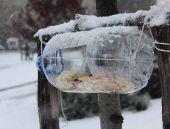 Ataşehir Belediyesi'nden hayvanseverlere çağrı