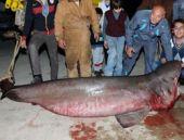 Mersin'de dört metrelik köpekbalığı yakalandı