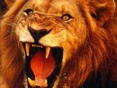 Vahşi Hayvanlarla Tehlikeli Çekim