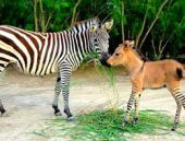 Dünya yeni bir hayvanla tanıştı