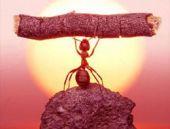 Karıncanın müthiş fotoğrafı bir de dua ederken var