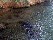 Bu hayvan türü Bodrum'da görüntülendi...bakın