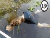 Nehre düşen adamı piranalar böyle yedi! (+18)
