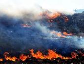 Bursa'da çam ormanında yangın