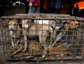 Köpekler açlıktan birbirini yedi!
