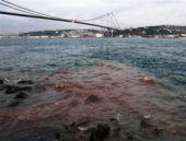 Boğaz'da aynı manzara! Kızıla boyandı