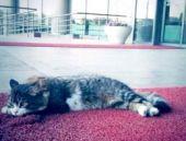 CHP genelgesini kedi imzaladı!