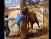 Kurbanlık deveye işkence! Böylesi görülmedi