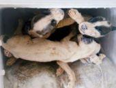 Buzdolabında onlarca ölü köpek vahşeti!